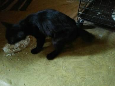 Kucing betina / cat
