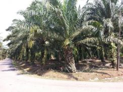 2.05 Acres TANJUNG BIN PONTIAN AGRICULTURE LAND for SALE