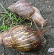 Land snails for forever safety new home