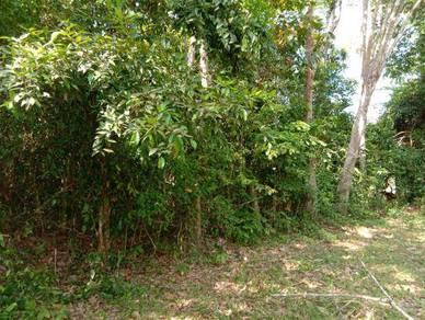 Tanah Pokok Getah Tua Kuala Nerang