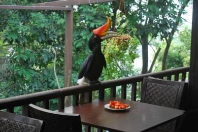 Kuala Lumpur Bird Park Tour | AMI Travel