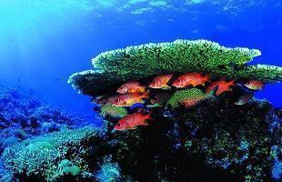 Saripacifica Sibu Island - Raya Promotion