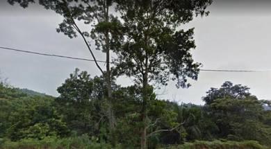 Tepi Jalan Tanah 11ekar Nilai, Negeri Sembilan