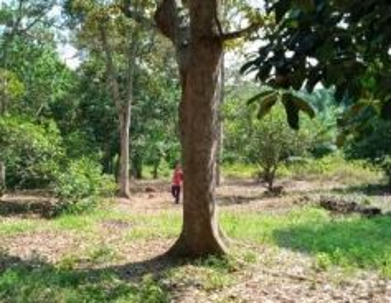 Dusun buahan 1.15ekar solok gajah mati chabau