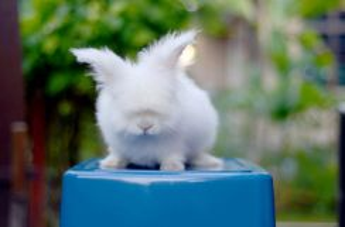 Arnab Teddy Bear Kecil Baka Pure Rabbit
