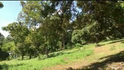 6.3 Acres YONG PENG DURIAN FARM For SALE