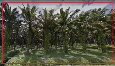 Agriculture Land, Air Kuning, Kampar, Changkat, Tapah, Perak (Q 2154)