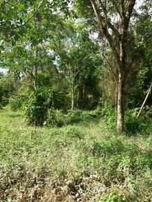 Tanah pertanian/penternakan untuk dijual