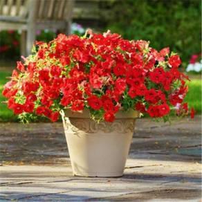 BIJI BENIH bunga petunia ( 50 biji/pek )