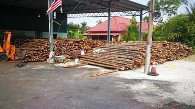 Kayu Bakau Cerucuk / Bakau Pile Supplier