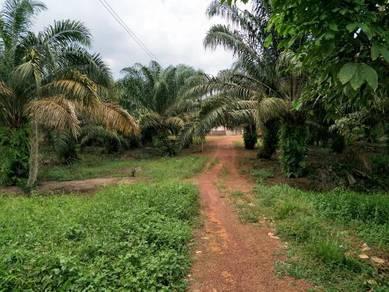 Tanah Sawit International Freehold Tepi Jalan Batu Pahat Johor