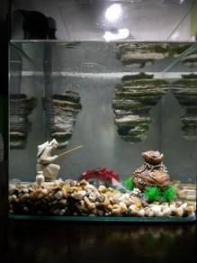 Fish Tank 31liter