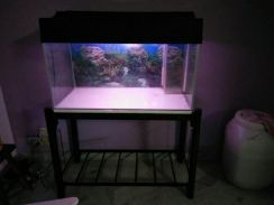 3 Kaki aquarium