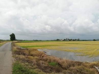 Tanah sawah seluas 2.38ekar di Yan , Kedah