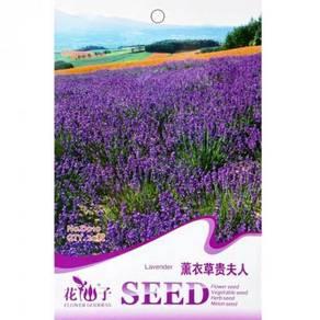 Lavendula pinnat seeds Lavender girl seed Lavender