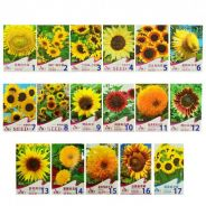 Sunflower Seed 17species ( 15-20 seed each pack )