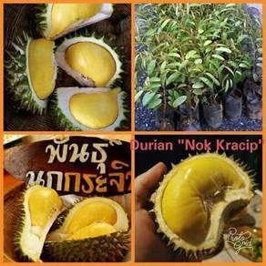 Durian Nok Kracik