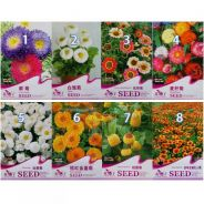Chrysanthemum Flower seeds ( 30-50 seed each pack