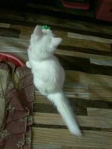 kucing Umur 6bulan