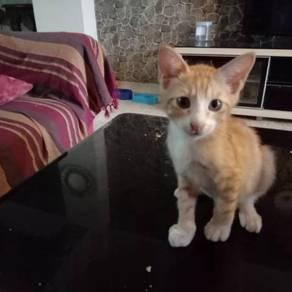 Kucing/ kitten for adoption