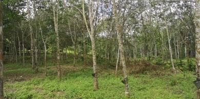 Tanah getah 6.012 ac Titian Bintangor Rembau