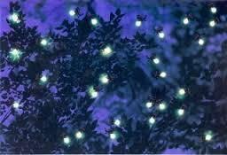Mangrove cruise / fireflies