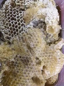 Madu lebah hutan