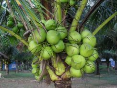 8acre coconut farm/lake/income/freehold/TNB SAJ/kota tinggi