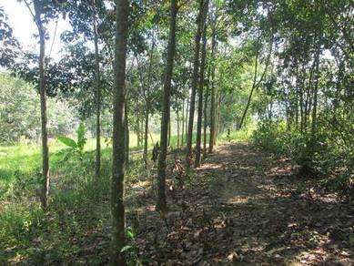 Agricultural Land 121,202sf at Mukim of Ulu Jempol, Negeri Sembilan