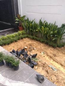 Tanam rumput /Pokok potong