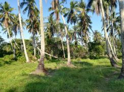 Land in kuala muda sales by cash or loan bank