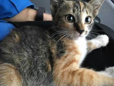 Kitten to adopt