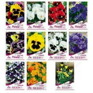 Mexican Imported Pansy Seeds Wavy Viola Tricolor