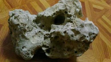 Batu karang untuk akuarium