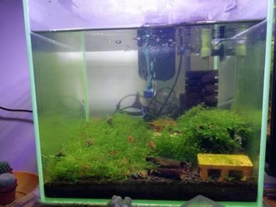 Akuarium shrimp