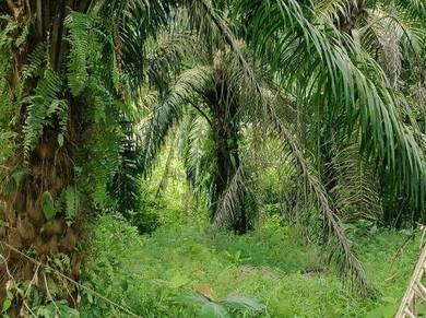 Tanah Pertanian 3.3 Ekar Belakang Sekolah Kampung Sawah Pontian Johor