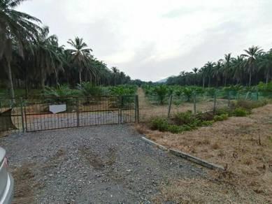 Kebun kelapa sawit 2 ekar