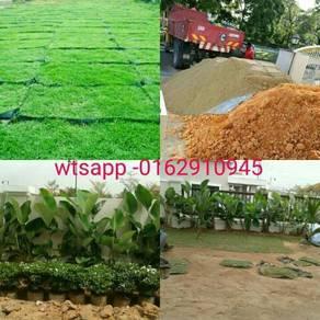 Landscape (tanam rumput +pokok potong) gardening