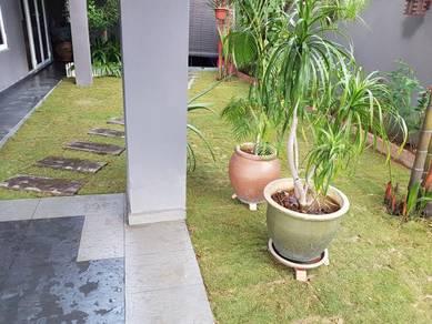 Tanam Rumput Pokok Jepan pearl grass potong pokok