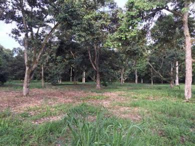 Kampung Setia Jaya 7. 2 Acres Durian Land (nearby Pekan Nanas)