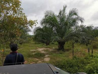 Tanah Kebun Sawit Rata Tepi Jalan Rezab Kampung Lakai Jelebu