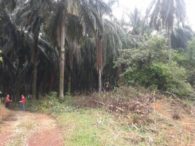 84 acres freehold land at dengkil sepang near unikl miat