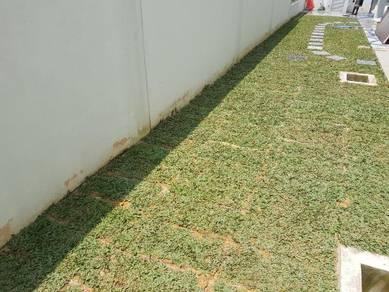 Tanam Rumput.potong pokok Artificial japan philipp