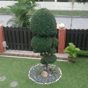 (tanam rumput)pokok potong(landscap)5
