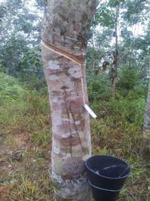 Rubber Land in Benta Pahang for Sale