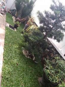 All kinds of Tanam rumput/Potong POKOK