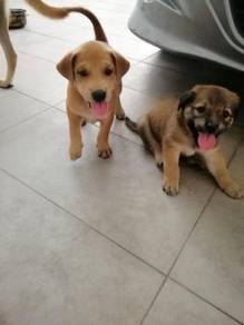 Gifr for pet lovers