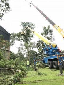 Perkhidmatan Pakar Tebang dan Cantas Pokok