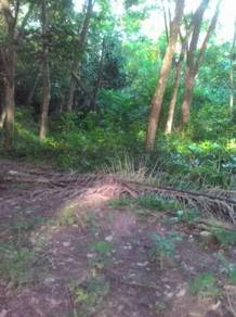 Kebun getah 5 ekar lebih di Kg Bukit Senggeh Jasin Melaka