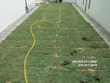 Halaman Rumah Tanam Rumput-_potong pokokk